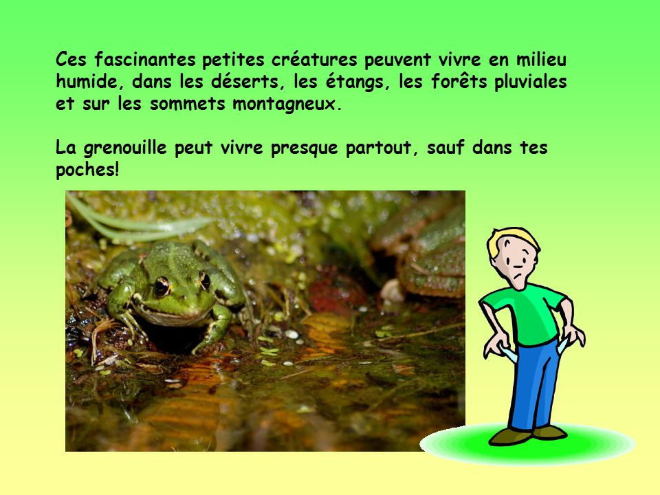 Savais-tu quil y a plus de 3000 espèces différentes de grenouilles dans le monde et que 24 de ces espèces se trouvent au Canada.