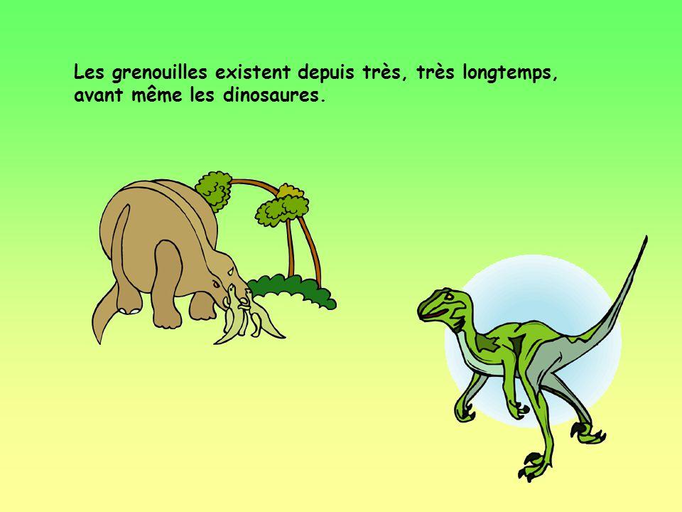 Une grenouille possède 8 doigts aux pattes antérieures.
