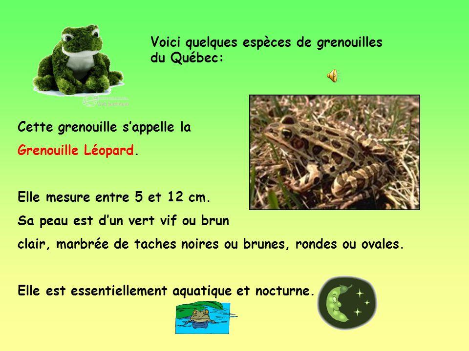 Voici quelques espèces de grenouilles du Québec: Cette grenouille sappelle la Grenouille Léopard.