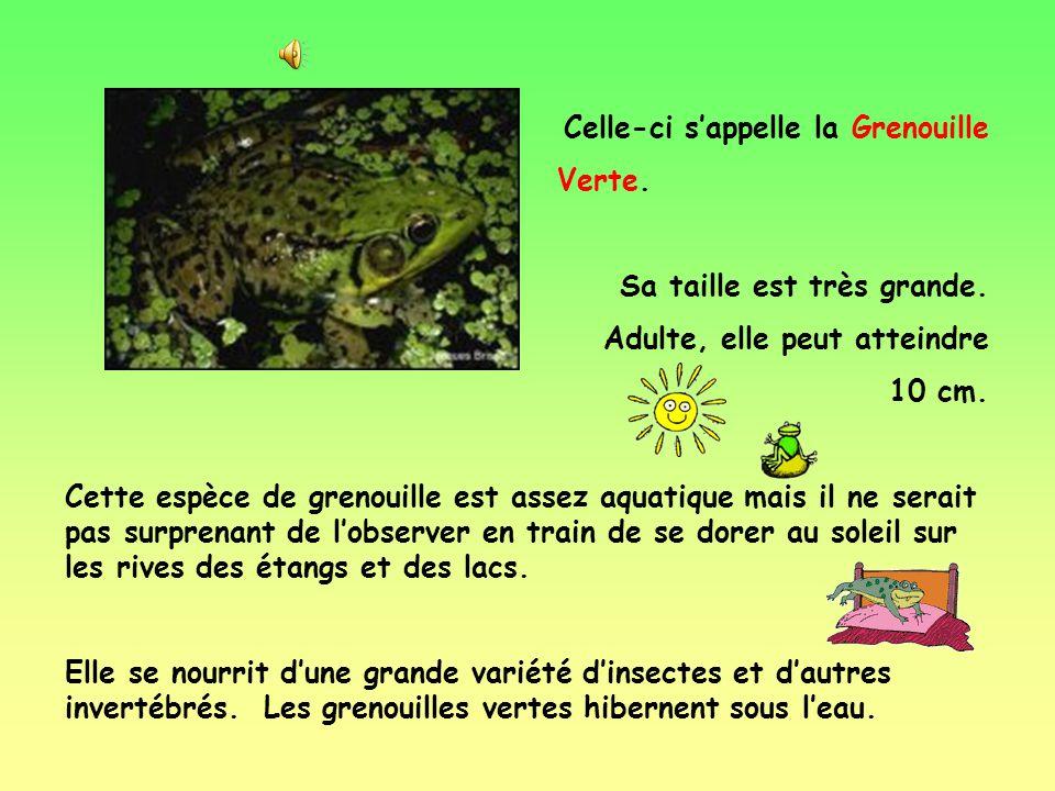 Voici quelques espèces de grenouilles du Québec: Cette grenouille sappelle la Grenouille Léopard. Elle mesure entre 5 et 12 cm. Sa peau est dun vert v