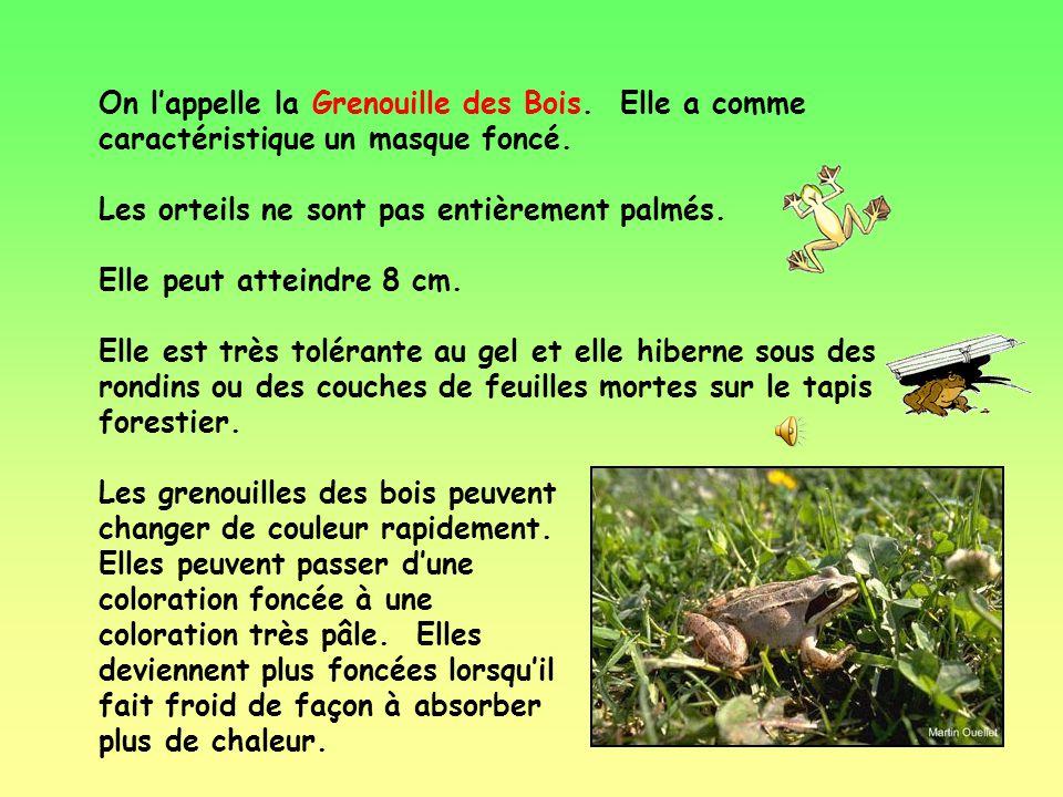 Au bout de 112 jours, une grenouille devient adulte.