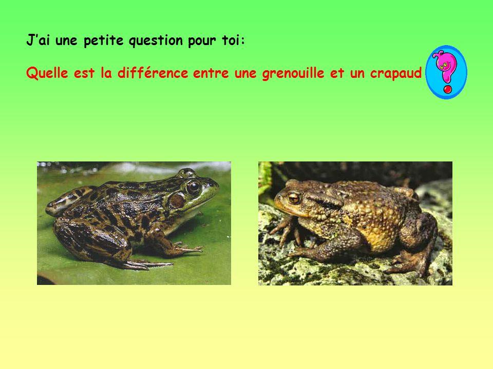 Une grenouille mange des insectes et des vers mais aussi presque tout ce qui pourrait entrer dans ta bouche.