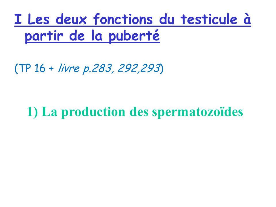 I Les deux fonctions du testicule à partir de la puberté (TP 16 + livre p.283, 292,293) 1) La production des spermatozoïdes