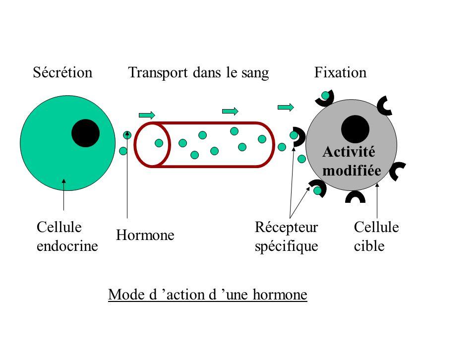 SécrétionTransport dans le sang Fixation Cellule endocrine Hormone Récepteur spécifique Cellule cible Activité modifiée Mode d action d une hormone