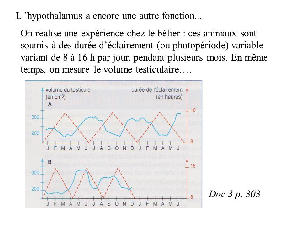 L hypothalamus a encore une autre fonction...
