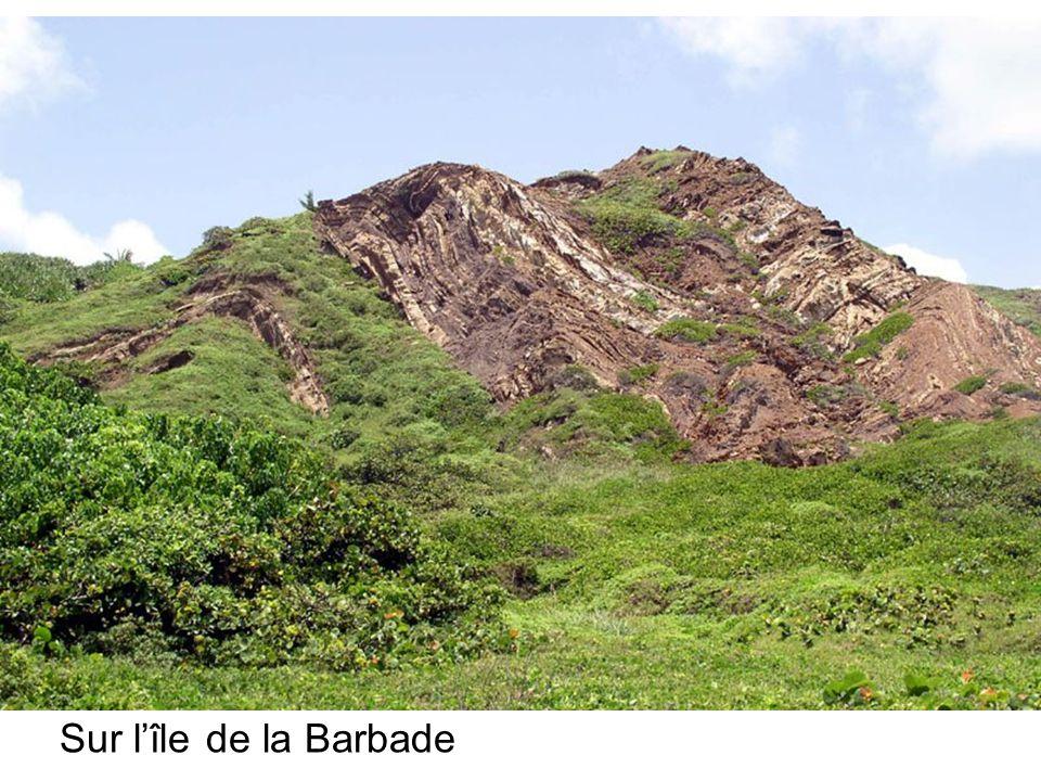 Sur lîle de la Barbade