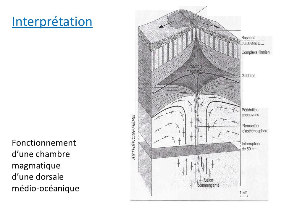 Fonctionnement dune chambre magmatique dune dorsale médio-océanique Interprétation