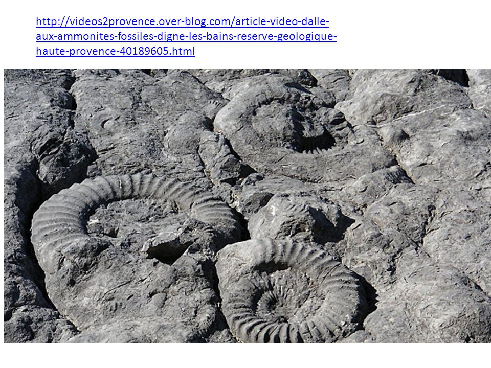http://videos2provence.over-blog.com/article-video-dalle- aux-ammonites-fossiles-digne-les-bains-reserve-geologique- haute-provence-40189605.html