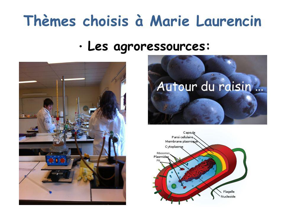 Thèmes choisis à Marie Laurencin Les agroressources: Autour du raisin …