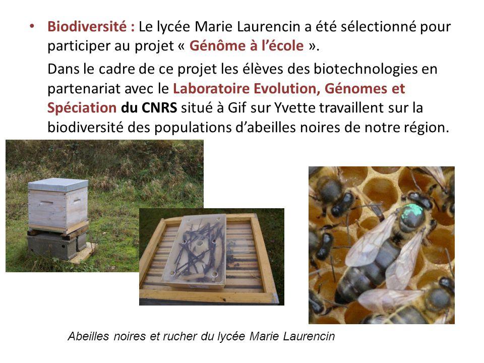 Biodiversité : Le lycée Marie Laurencin a été sélectionné pour participer au projet « Génôme à lécole ». Dans le cadre de ce projet les élèves des bio