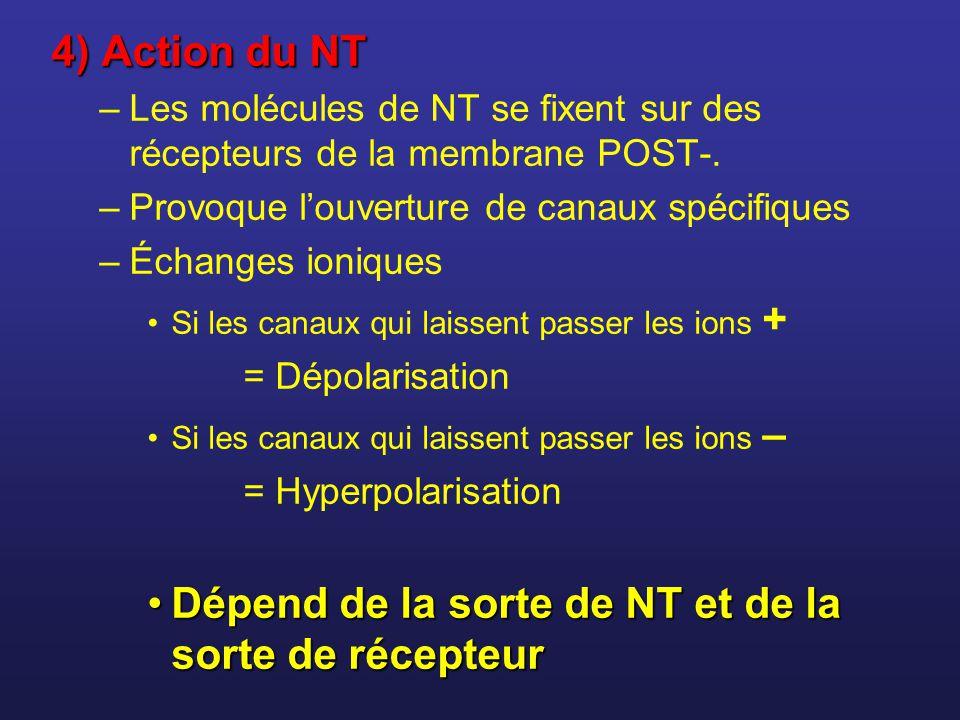 4) Action du NT –Les molécules de NT se fixent sur des récepteurs de la membrane POST-. –Provoque louverture de canaux spécifiques –Échanges ioniques