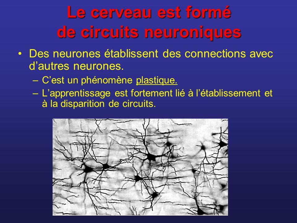 La synapse Synapse = point de « connexion » entre deux neurones 1 mm 3 de substance grise du cortex peut contenir 5 milliards de synapses.