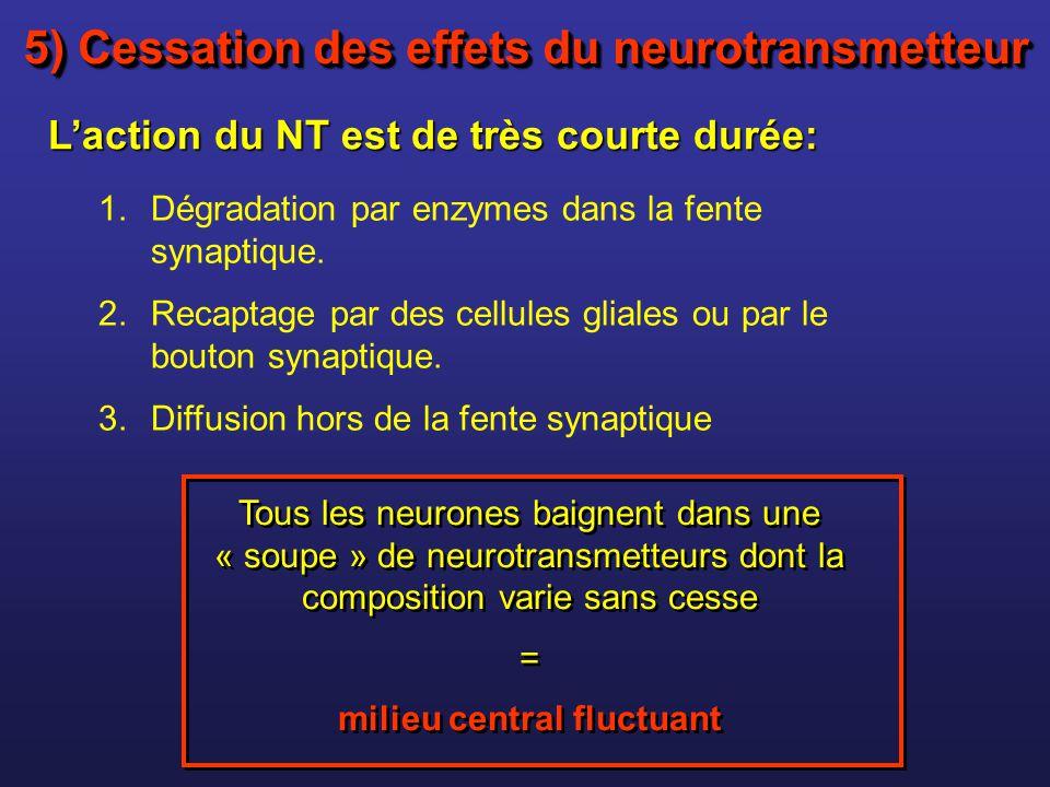 1.Dégradation par enzymes dans la fente synaptique. 2.Recaptage par des cellules gliales ou par le bouton synaptique. 3.Diffusion hors de la fente syn