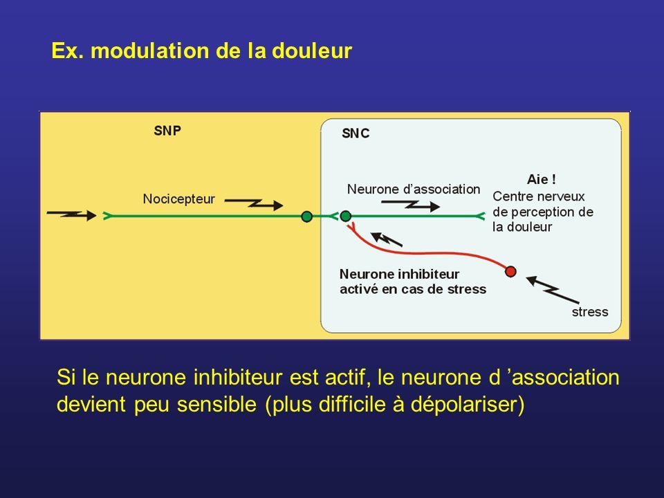 Ex. modulation de la douleur Si le neurone inhibiteur est actif, le neurone d association devient peu sensible (plus difficile à dépolariser)
