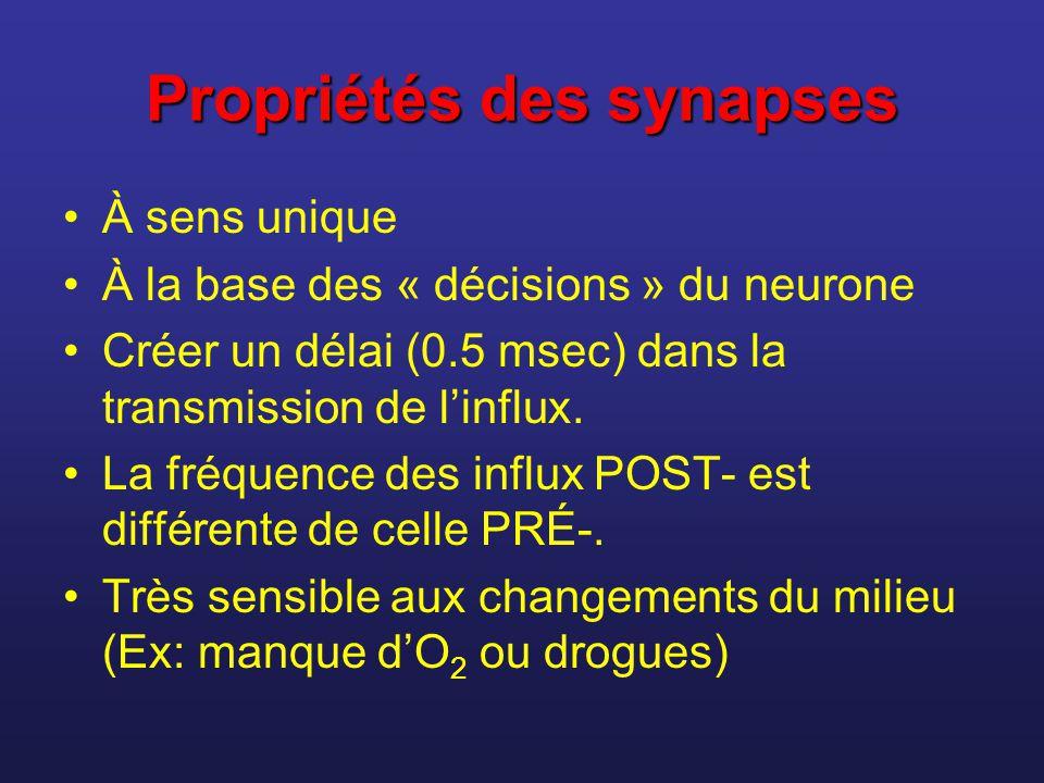 Propriétés des synapses À sens unique À la base des « décisions » du neurone Créer un délai (0.5 msec) dans la transmission de linflux. La fréquence d