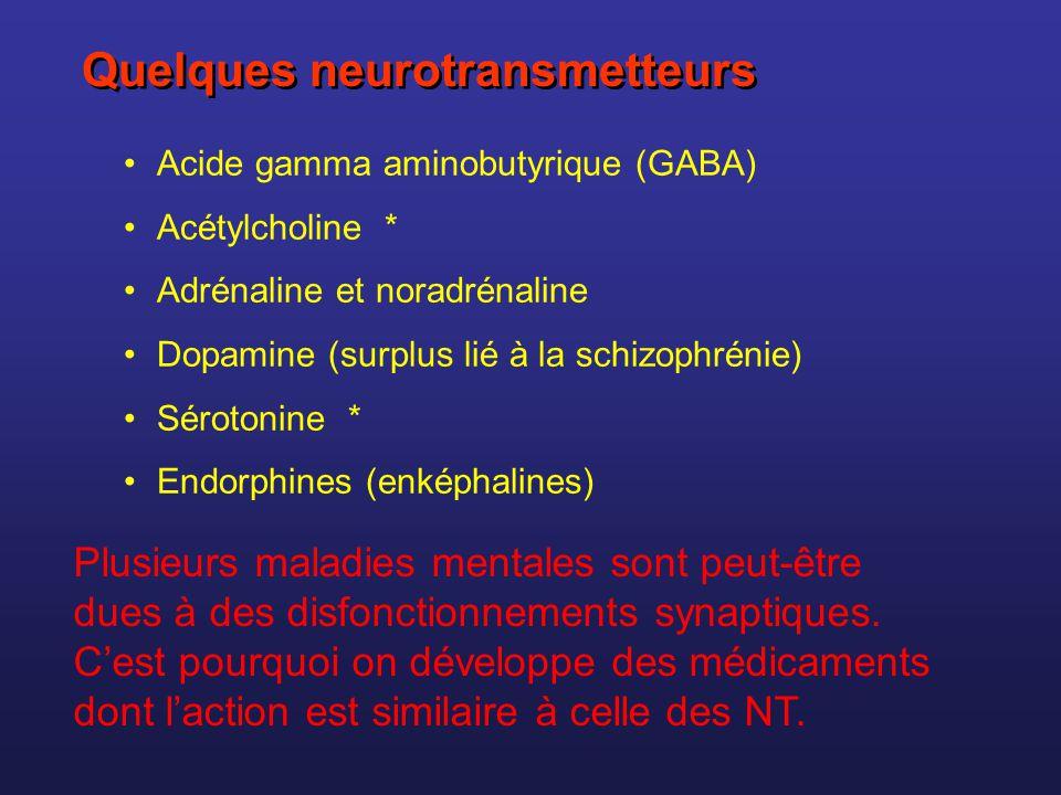 Acide gamma aminobutyrique (GABA) Acétylcholine * Adrénaline et noradrénaline Dopamine (surplus lié à la schizophrénie) Sérotonine * Endorphines (enké