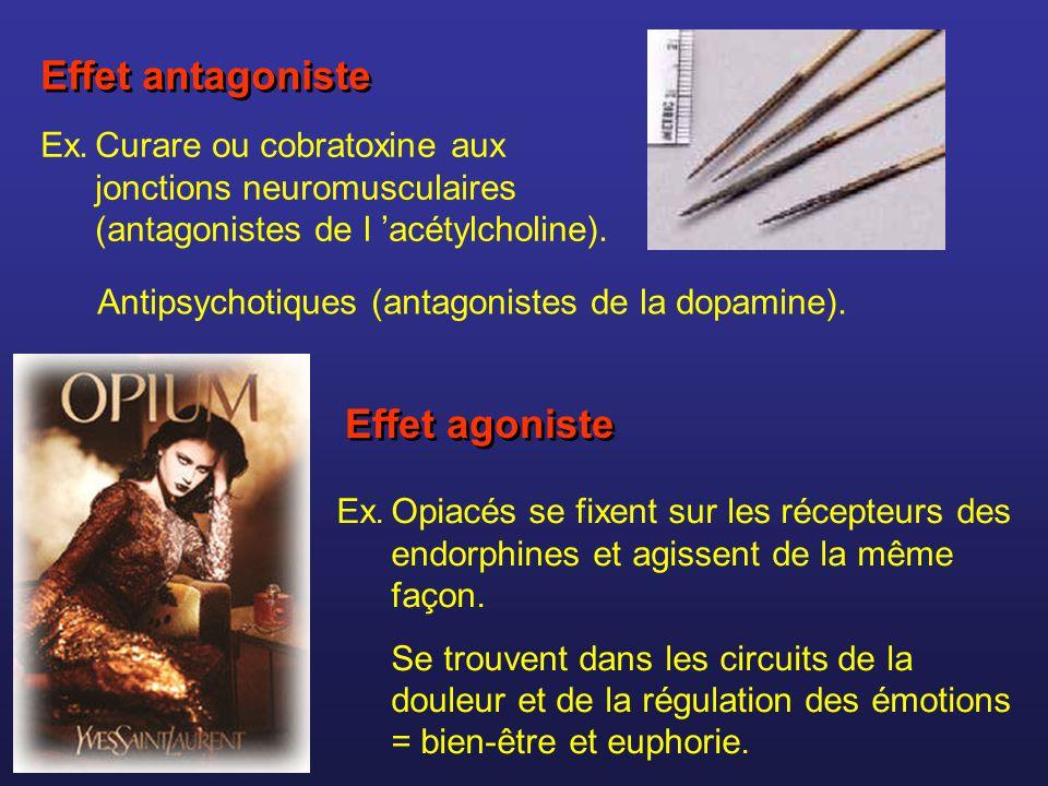 Effet agoniste Ex.Opiacés se fixent sur les récepteurs des endorphines et agissent de la même façon. Se trouvent dans les circuits de la douleur et de