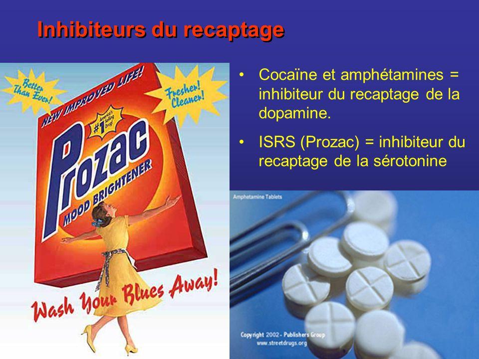 Inhibiteurs du recaptage Cocaïne et amphétamines = inhibiteur du recaptage de la dopamine. ISRS (Prozac) = inhibiteur du recaptage de la sérotonine