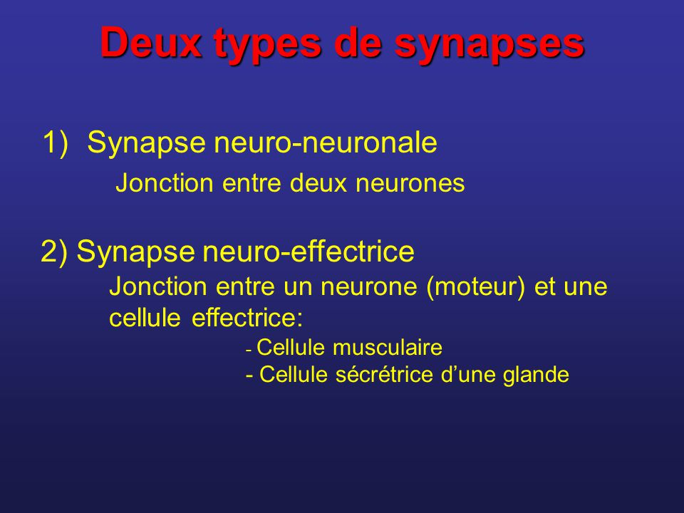 Acide gamma aminobutyrique (GABA) Acétylcholine * Adrénaline et noradrénaline Dopamine (surplus lié à la schizophrénie) Sérotonine * Endorphines (enképhalines) Plusieurs maladies mentales sont peut-être dues à des disfonctionnements synaptiques.