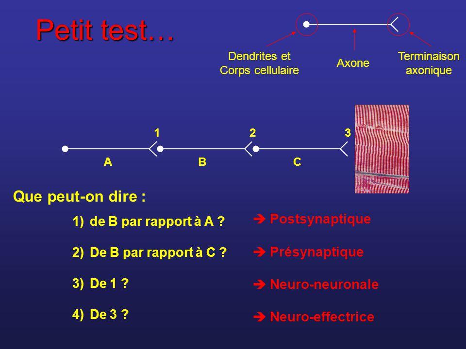 Petit test… A BC 321 1)de B par rapport à A ? 2)De B par rapport à C ? 3)De 1 ? 4)De 3 ? Postsynaptique Présynaptique Neuro-neuronale Neuro-effectrice