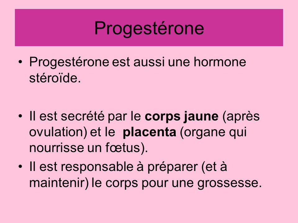 Œstrogènes Sont des hormones stéroïdes. Stimule des caractères sexuels secondaires. –Développement des seins –Développement du vagin et utérus –Croiss