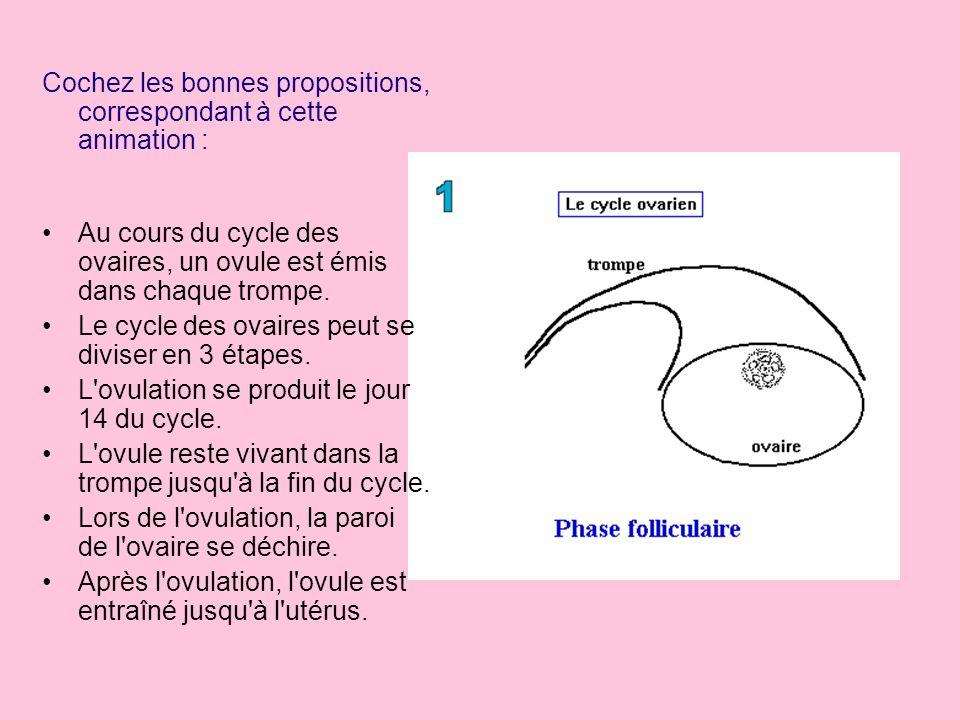 Cochez les bonnes propositions, correspondant à cette animation : Au cours du cycle, la couche interne de l'utérus change d'épaisseur. La couche inter