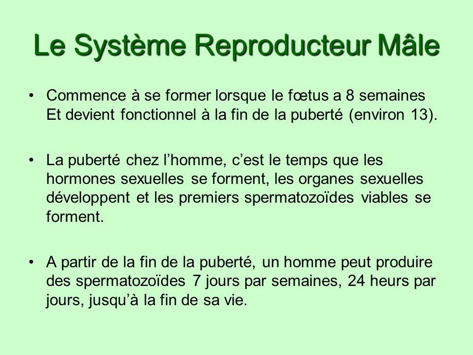 GnRH = hormone libérine des gonadotrophine FSH = hormone follicostimuline LH = hormone lutéinisante Testostérone Estrogène Progestérone