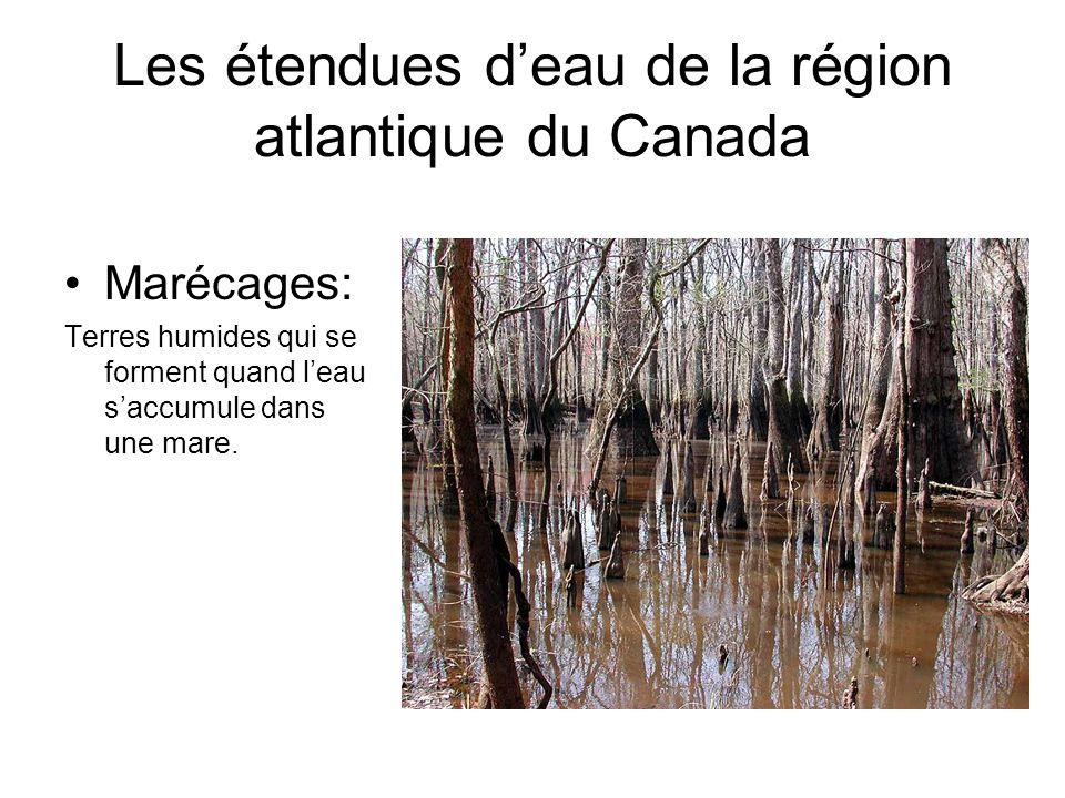 Marécages: Terres humides qui se forment quand leau saccumule dans une mare. Les étendues deau de la région atlantique du Canada