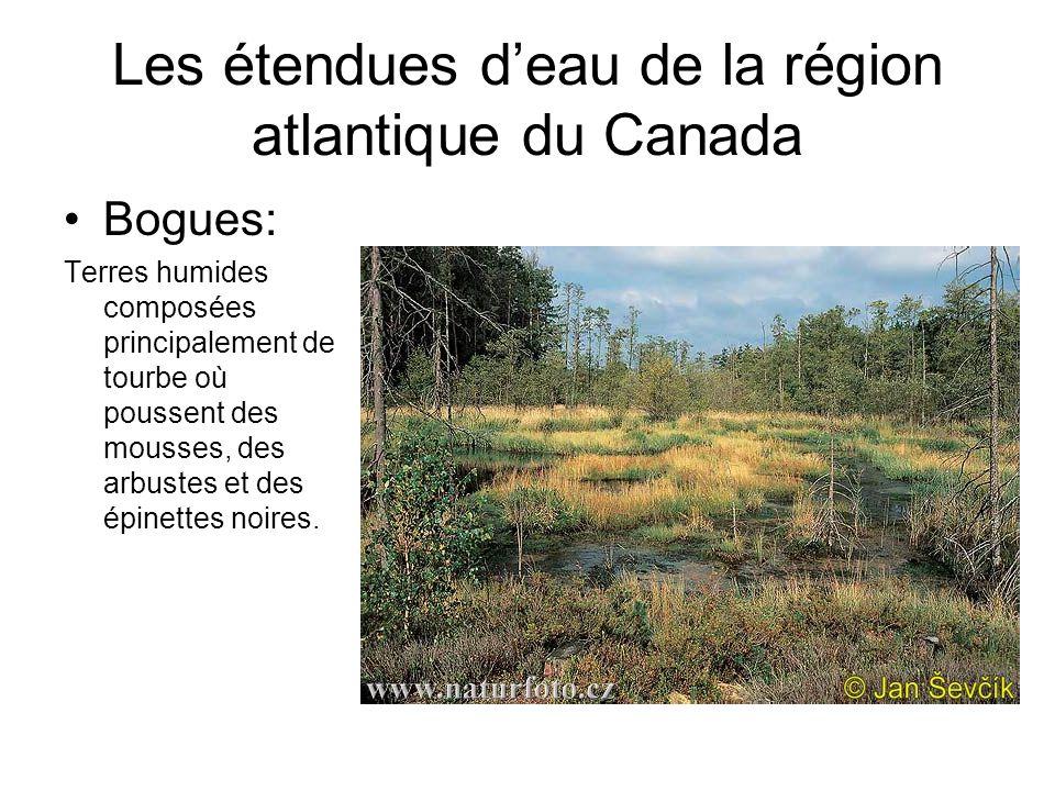 Bogues: Terres humides composées principalement de tourbe où poussent des mousses, des arbustes et des épinettes noires.
