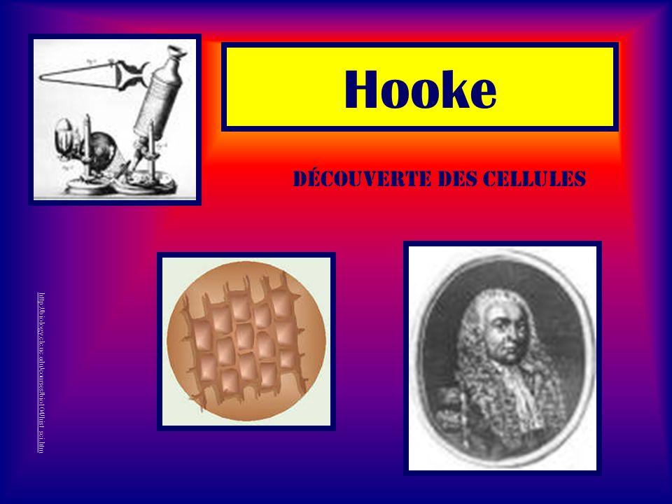 Hooke http://biology.clc.uc.edu/courses/bio104/hist_sci.htm Découverte des cellules