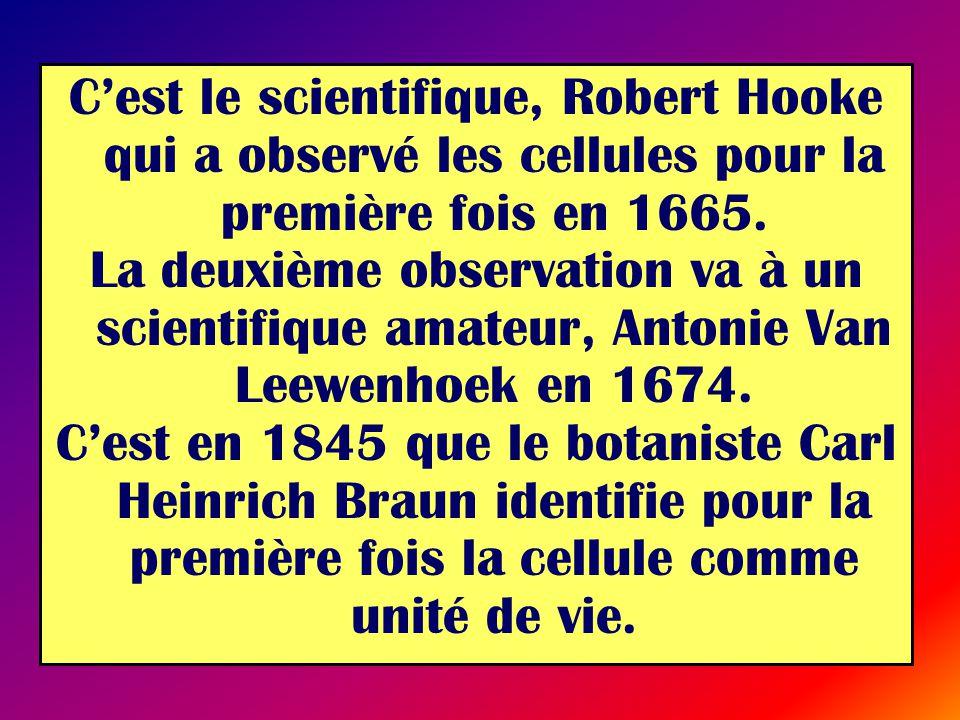 Cest le scientifique, Robert Hooke qui a observé les cellules pour la première fois en 1665. La deuxième observation va à un scientifique amateur, Ant