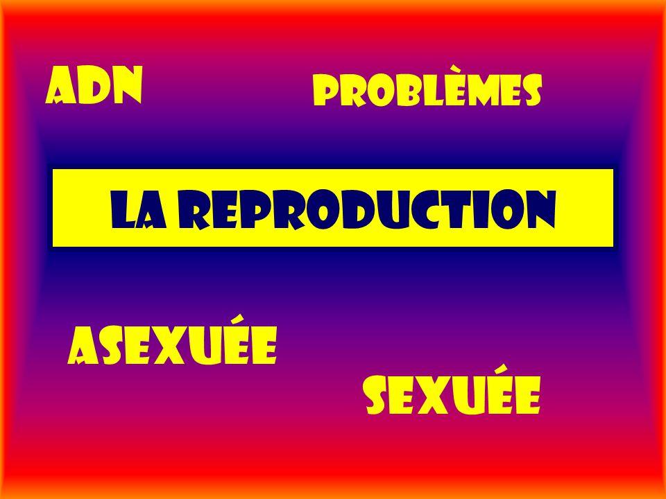 La reproduction Asexuée sexuée problèmes Adn