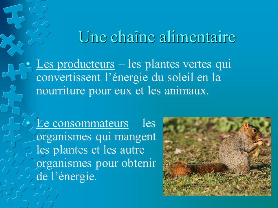 Une chaîne alimentaire Les producteurs – les plantes vertes qui convertissent lénergie du soleil en la nourriture pour eux et les animaux. Le consomma