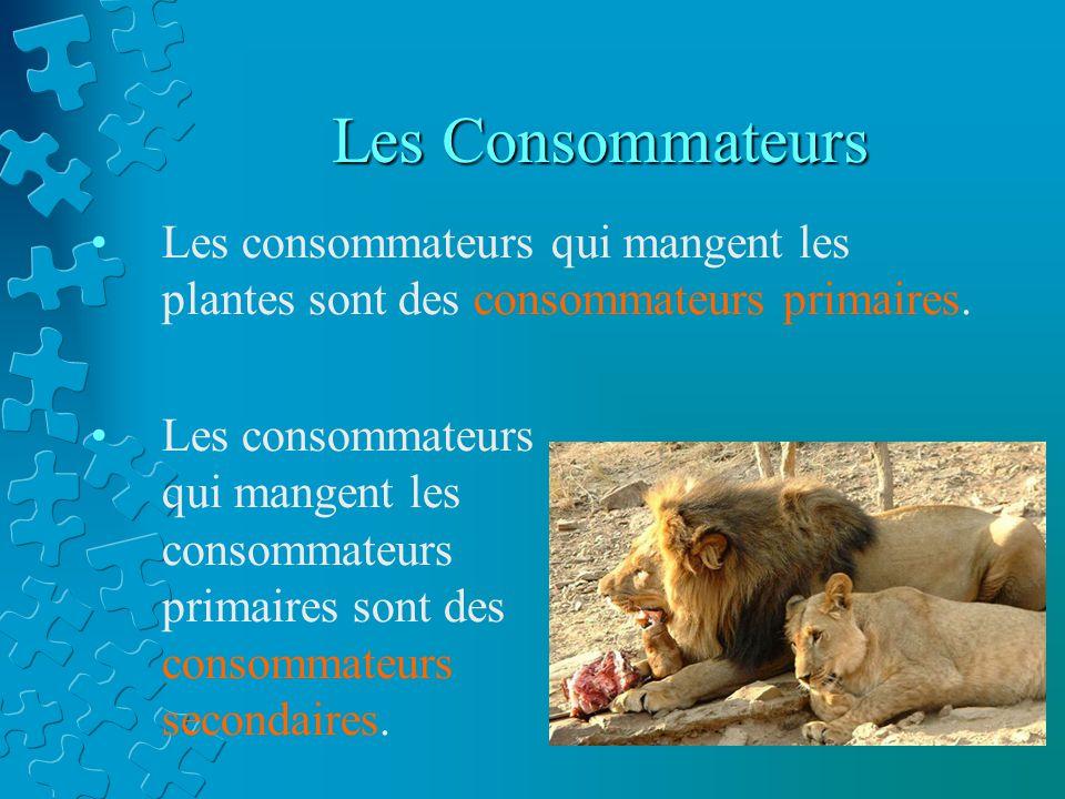 PRODUCTEUR LES CONSOMMATEURS