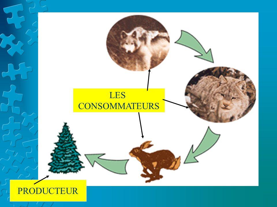 Les niveaux trophiques Chaque étape dans une chaîne alimentaire représente un niveau trophique.