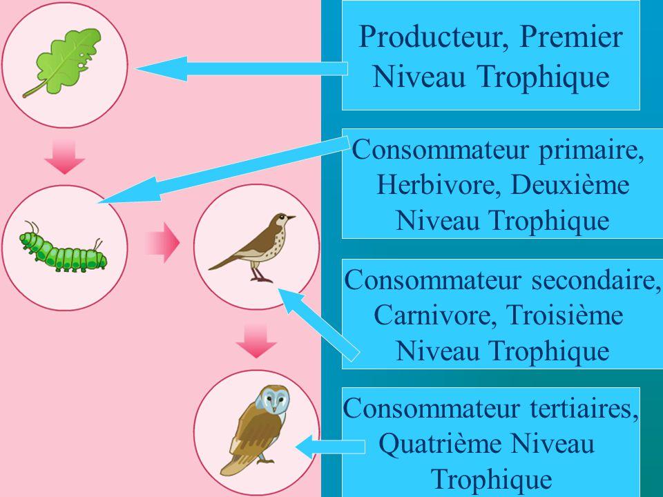 Les Décomposeurs Il y a deux groupes de décomposeurs: 1.Les détrivores: Les vers, les crabes, les mollusques, etc.
