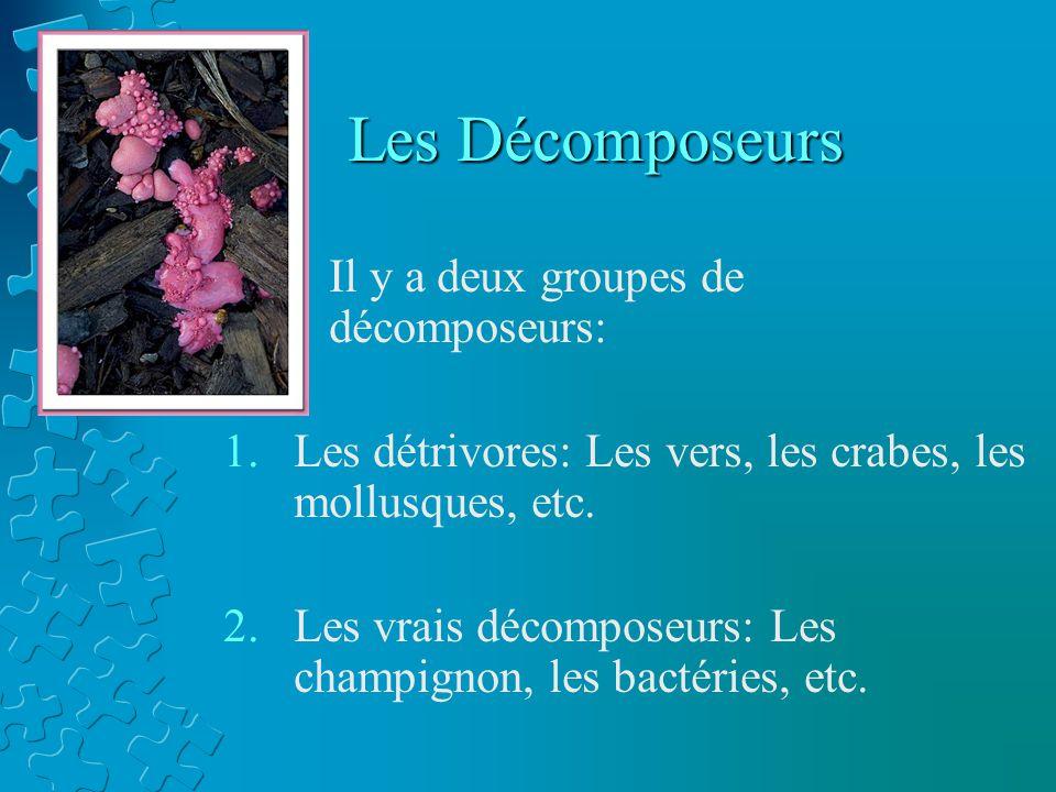 Les Décomposeurs Il y a deux groupes de décomposeurs: 1.Les détrivores: Les vers, les crabes, les mollusques, etc. 2.Les vrais décomposeurs: Les champ