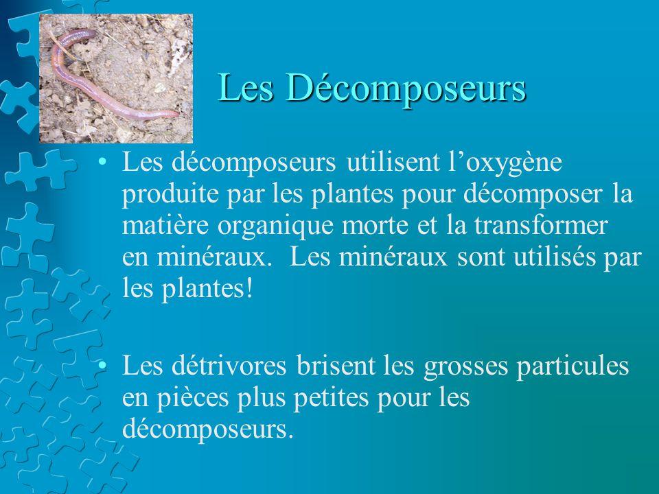 Les Décomposeurs Les décomposeurs utilisent loxygène produite par les plantes pour décomposer la matière organique morte et la transformer en minéraux