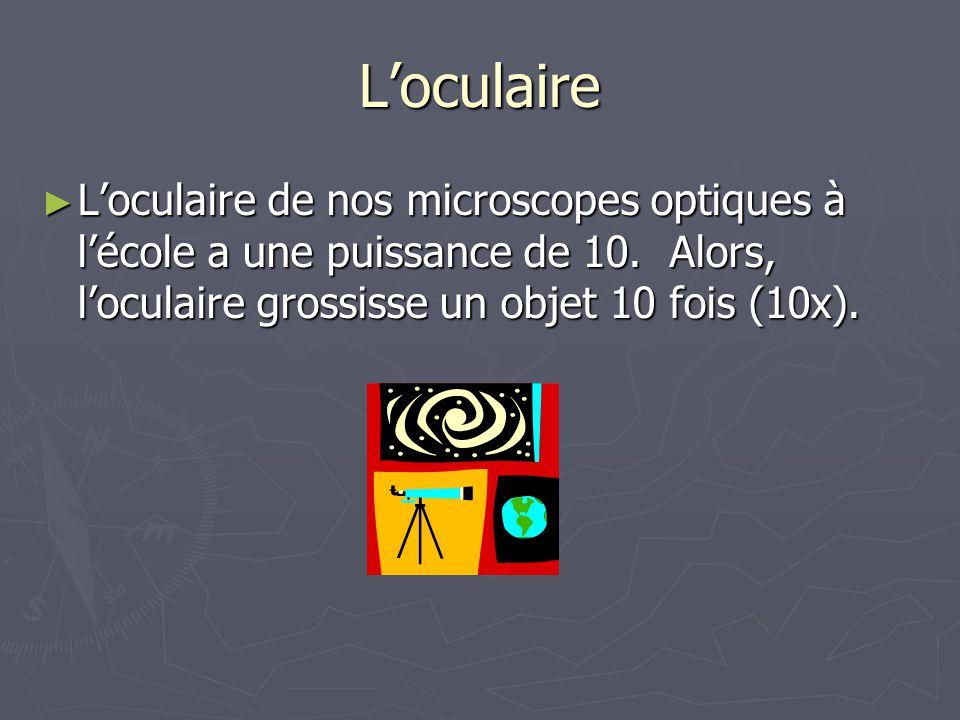 Loculaire Loculaire de nos microscopes optiques à lécole a une puissance de 10. Alors, loculaire grossisse un objet 10 fois (10x). Loculaire de nos mi