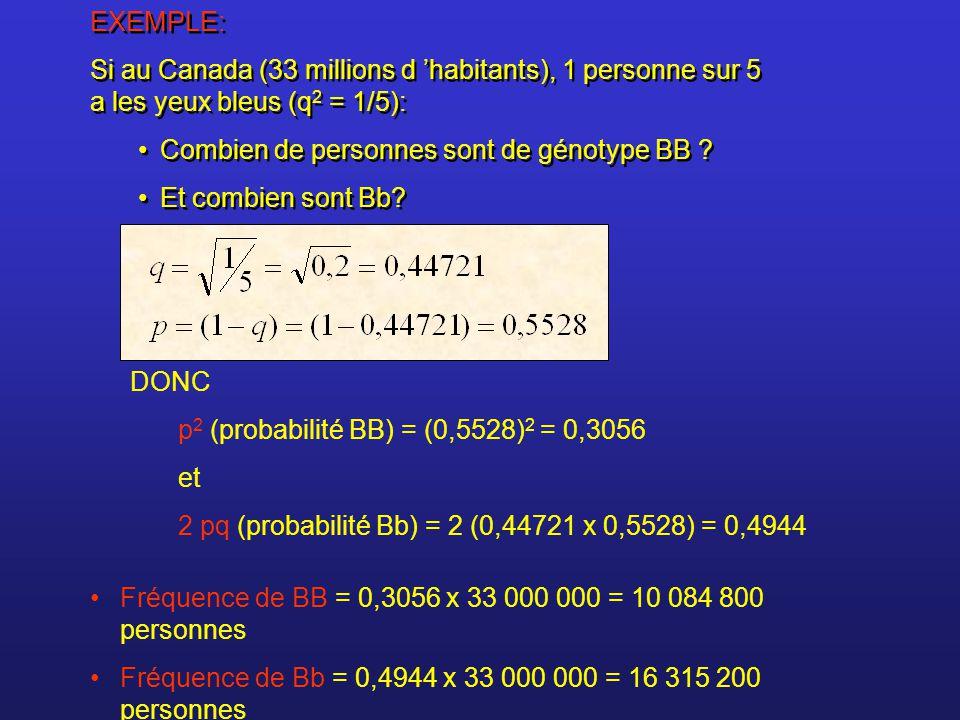 EXEMPLE: Si au Canada (33 millions d habitants), 1 personne sur 5 a les yeux bleus (q 2 = 1/5): Combien de personnes sont de génotype BB ? Et combien