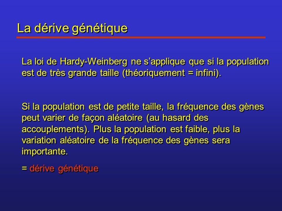 La dérive génétique La loi de Hardy-Weinberg ne sapplique que si la population est de très grande taille (théoriquement = infini). Si la population es