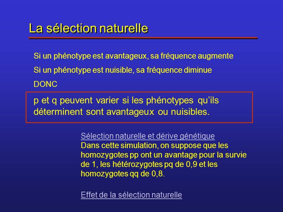 La sélection naturelle Si un phénotype est avantageux, sa fréquence augmente Si un phénotype est nuisible, sa fréquence diminue DONC p et q peuvent va