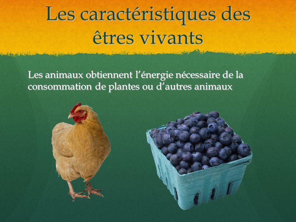 Les caractéristiques des êtres vivants Les animaux obtiennent lénergie nécessaire de la consommation de plantes ou dautres animaux