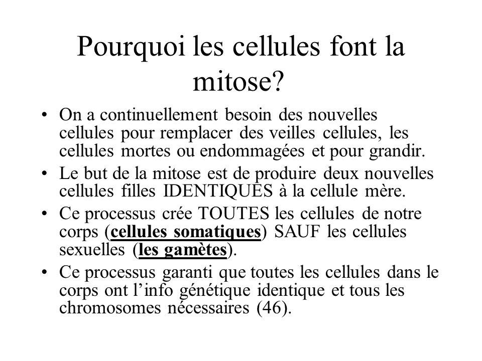 Pourquoi les cellules font la mitose.