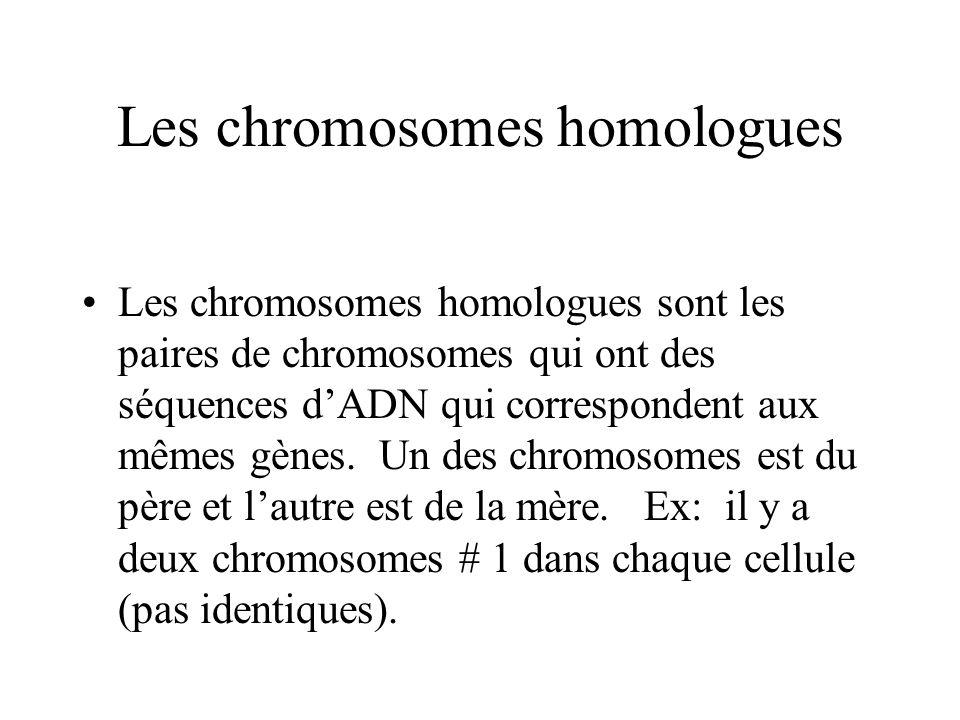 Les chromosomes homologues Les chromosomes homologues sont les paires de chromosomes qui ont des séquences dADN qui correspondent aux mêmes gènes.