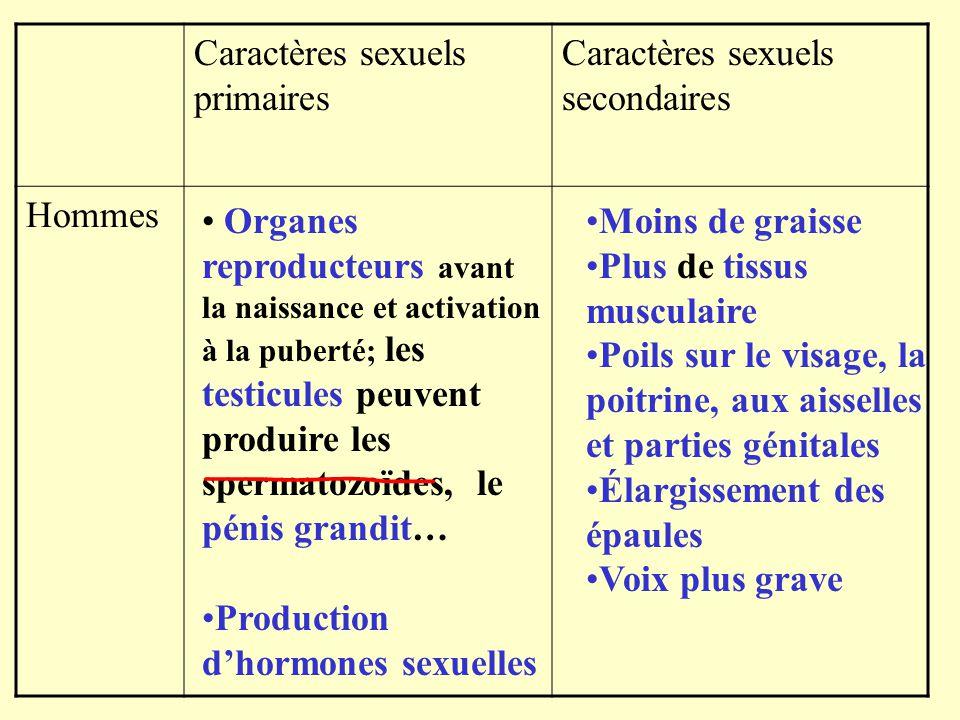 Caractères sexuels primaires Caractères sexuels secondaires Hommes Organes reproducteurs avant la naissance et activation à la puberté; les testicules