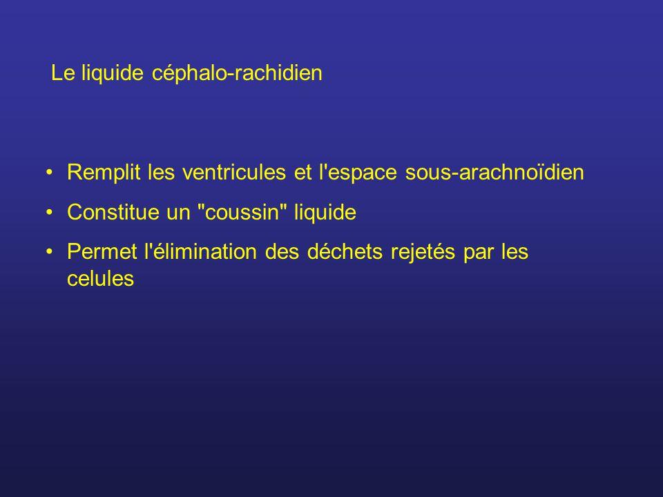 Le liquide céphalo-rachidien Remplit les ventricules et l espace sous-arachnoïdien Constitue un coussin liquide Permet l élimination des déchets rejetés par les celules