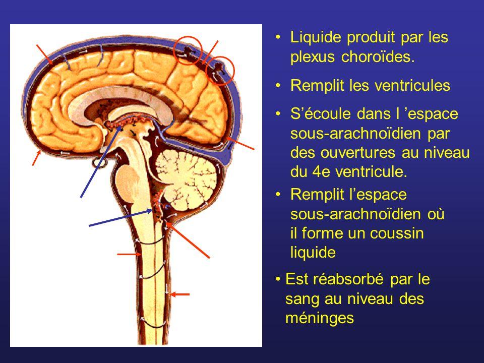 Est réabsorbé par le sang au niveau des méninges Liquide produit par les plexus choroïdes. Remplit les ventricules Sécoule dans l espace sous-arachnoï