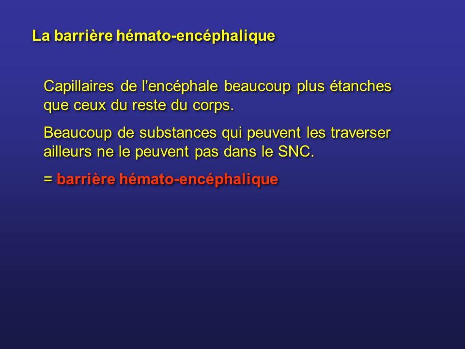 La barrière hémato-encéphalique Capillaires de l'encéphale beaucoup plus étanches que ceux du reste du corps. Beaucoup de substances qui peuvent les t