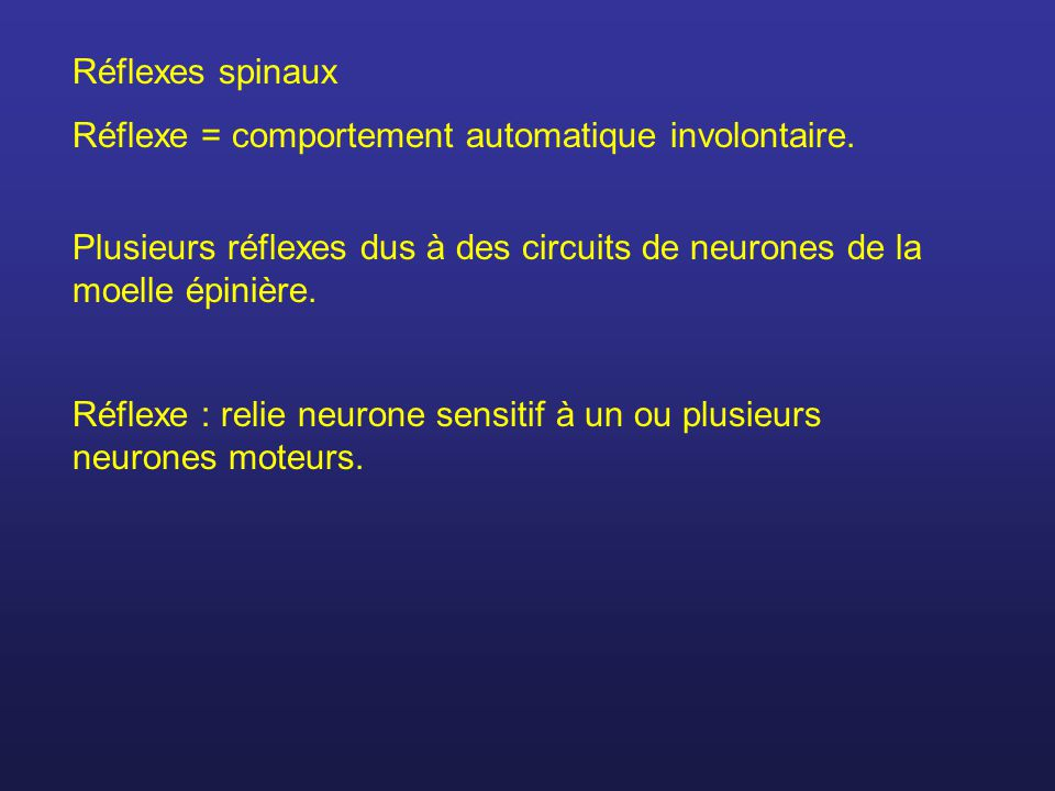 Réflexes spinaux Réflexe = comportement automatique involontaire. Plusieurs réflexes dus à des circuits de neurones de la moelle épinière. Réflexe : r